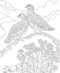 Hard Bird Coloring Pages For Adults Bestappsforkidscom