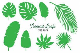Leaf svg free vector leaf svg leaves maple leaf background nature plant green veins fall tree autumn symbol element fine halo spring environment decoration star illustration leaf svg free vector we have about (89,925 files) free vector in ai, eps, cdr, svg vector illustration graphic art design format. Tropical Leaf Svg Vector Design Bundle Monstera Clipart Tropical Leaves Vector Design Clip Art