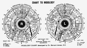 Toni Miller Iridology Chart 27 Memorable Iridology Chart Male