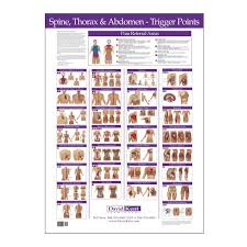 Vertebrae Number Chart Trigger Point Chart Spine Thorax And Abdomen