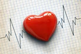 cardiogram pulse trace and heart concept for cardiovascular cal exam