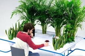 Office cubicle plants Grow Desk Plants The Cleanest And Greenest Work Desk Grows Fresh Air Cubicle Plants Reddit Office Desk Desk Plants Ysotinfo Desk Plants How Do You Care For An Office Plant Plants For Office