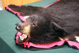 bear rug for faux bear rug large size of winsome fake bear skin rug with bear rug for ersatz bearskin rug