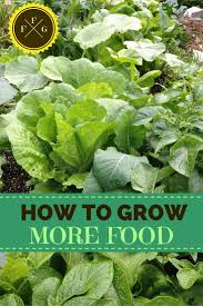 Kitchen Garden Foods 17 Best Images About Gardening On Pinterest Gardens Raised Beds