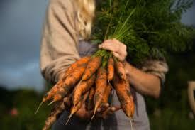 <b>Don</b>'<b>t</b> Judge a <b>Carrot</b> by the Cover - Cornell Small Farms