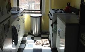 Your cat will find the one patch of sun in your tiny apartment. And then  monopolize it.