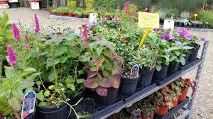 Garden Centre Kitchener Perennials In Kitchener Waterloo Cambridge And Guelphgreenway