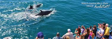 Whale Watching Dana Point 13 Offer Daveys Locker
