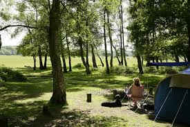 for more information on dog friendly acmodation in the new forest visit the official new forest tourism or new forest cotes