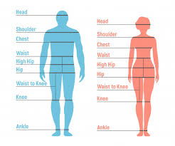 Man And Woman Size Chart Human Front Side Silhouette