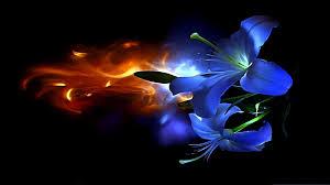 Risultati immagini per fiore colorato