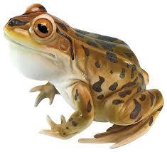 garden frog statue. Lester The Leopard Frog Statue Tropical-garden-statues-and-yard-art Garden