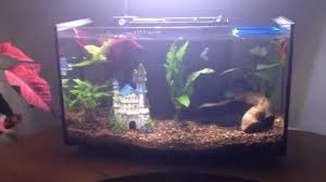 petco fish tanks. Beautiful Tanks Petco Arc 625 Tank Design Defect On Fish Tanks