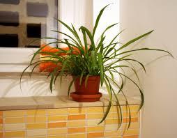 Mehr Spaß Im Bad Mit Pflanzen Landwirtschaftskammer Nordrhein