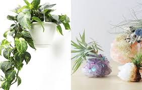 house plants. 7 Low-Maintenance Houseplants That Will Make Your Place Classy As Hell | SELF House Plants