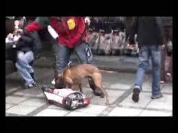 pitbull terrier fight. Contemporary Pitbull With Pitbull Terrier Fight I