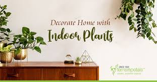 decorate home with these indoor plants