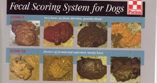 Fecal Scoring Chart Healthy Dog Poop Chart Uk Bristol Stool Chart For Kids