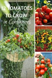 The 35 Easiest Container And Pot Friendly Fruits Vegetables And Container Garden Plans Tomatoes