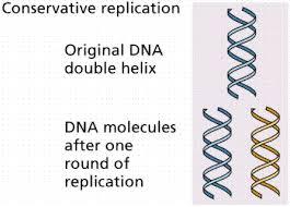 Dna Replication Definition Dna And Molecular Genetics
