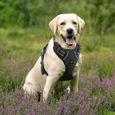 Rabbitgoo Dog Harness Size Chart Best No Pull Dog Harness Review A Complete Guide 2019
