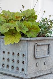 Planting Flowers, Garden Junk, Galvanized Metal, Warm