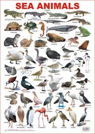 Educational Charts Series Sea Animals