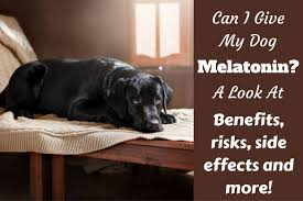 Melatonin For Dogs Is It Safe For Puppies Dosage Risks