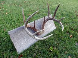 the antler mount