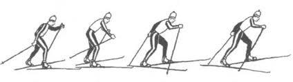 Виды ходов на лыжах для уроков по лыжной подготовке Двухшажный коньковый ход