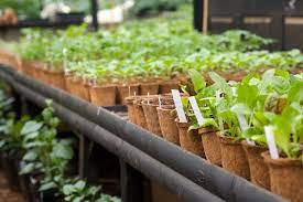 creating the perfect herb garden at