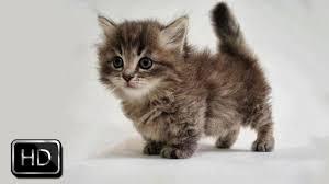 cute fluffy kittens. Perfect Kittens Inside Cute Fluffy Kittens O