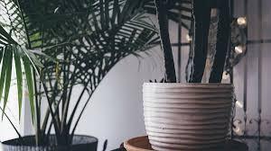 Zimmerpflanzen Zu Verschenken Die Besten Portale Focusde