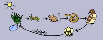 animal food chain for kids. Wonderful Food So Food Chains Make A Full Circle And Energy Is Passed From Plant To Animal  Decomposer Back Plant There Can Be Many Links In  Throughout Animal Food Chain For Kids D