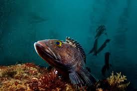 The Real Sea World 10 Stunning Photos of Amazing Underwater