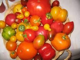 """Résultat de recherche d'images pour """"tomates variées"""""""