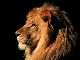 lion wallpapers mac os x