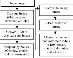 Rbc Morphology Chart Flow Chart Of Measurement Minimum And Maximum Radius Of Red