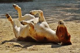 Image result for free donkey pics