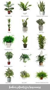 small plants for office. Small Office Plant. Potted Plants And Best For Inspiring Unique Interior Plant Ideas O