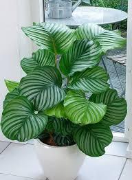 house plants. 12 Plantas Que Pueden Sobrevivir Incluso En El Rincón Más Oscuro De Tu Hogar House Plants