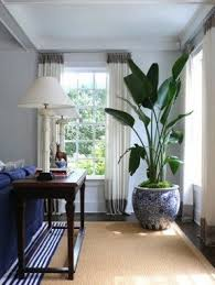 Large indoor planters 1