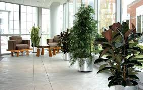 interior landscaping office. Wonderful Landscaping Interior Landscaping Jobs Uk Reading Ma Office Plant Care Service And Co Op  Lobby Intended Interior Landscaping Office D