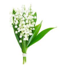 Le bouquet de muguet, la fleur qui réunit la beauté et le bonheur: |  FloraQueen