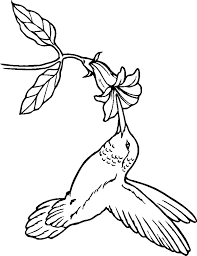 Small Picture Hummingbird Coloring Pages All Coloring Pages