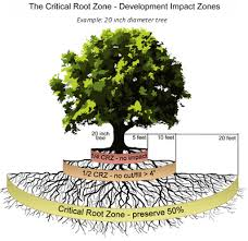 Tree Root Size Chart Tree And Natural Area Preservation Development Services