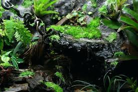 gallon vivarium pic heavy orchid board most complete forum on the web terrarium waterfall diy
