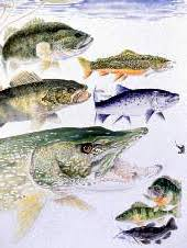 Freshwater Fishes Of New York Series Nys Dept Of
