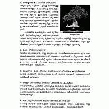 a simple essay resume romeo et juliette william shakespeare navy essay importance of trees essay important of english language guftugu vridhasadanam malayalam essay on ente image