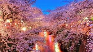 Download Japanese Cherry Blossom Background High Quality